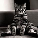 Аватар Кот сидит на диване расставив задние лапы