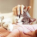 Аватар Рука гладит кошку