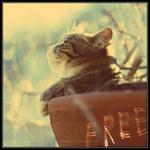Аватар Кот сидит в горшке (Free / Свобода)