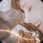 Аватары кошки