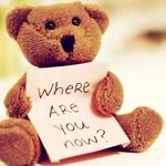 Аватар Сидящий плюшевый мишка держит табличку с фразой: где ты сейчас?/where are you now?