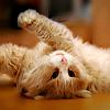 Аватар Кот с выразительными черными глазами лежит на полу
