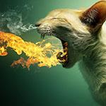 Аватар Кот, у которого изо рта идет огонь, а из носа дым