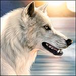 Аватар Белый волк на фоне озера и заходящего солнца, художник под псевдонимом DarkIceWolf