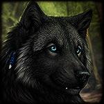 Аватар Черный волк с голубыми глазами. Художник DarkIceWolf