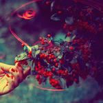 Аватар Женская рука прикасается к ягодам калины
