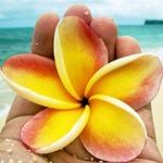 Аватар Цветок плюмерии в руке на фоне морского берега