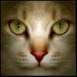 99px.ru аватар Коричневая кошка розовым носом