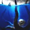 Аватар Гигантский осьминог-убийца в погоне за кораблем