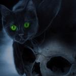 Аватар Дымчато - черная кошка с зелеными глазами сидит на черепе