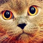 Аватар Кот с ярко-желтыми глазами