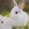 Аватар Белый кролик сидит на траве