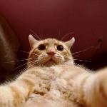 Аватар Кот фотографирует самого себя