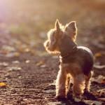 Аватар Щенок стоит на дороге, усыпанной осенними листьями, и смотрит вдаль