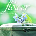 Аватар Нежные незабудки с листом лежат на шкатулке (Flower / Цветок)