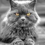 Аватар Кот с желтыми глазами