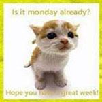 Аватар Короткошерстный белый с рыжими пятнами котенок сидит и смотрит в сторону. (Is it monday already? Hope you have a great week! / Уже понедельник? Надеюсь, что у вас замечательная неделя!)