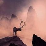 Аватар Олень стоит на горе, фотограф Caras Ionut