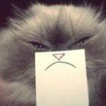 Аватар Кот с грустной улыбкой на бумажке