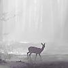 Аватар Лань в тумане