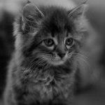 Аватар Маленький котенок, фотограф NekoByaka