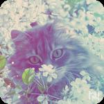 Аватар Кот среди цветущих веток яблони