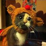 Аватар Кот в карнавальном костюме