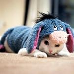 Аватар Белый кот одетый в меховой костюм мультипликационного героя мультфильма Винни-Пух / Winnie the Pooh ослика Иа́-Иа́ / Eeyore, лежащий на полу