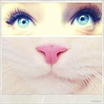 Аватар Глаза девушки и морда белой кошки