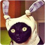 Аватар Черная кошка в необычном головном уборе