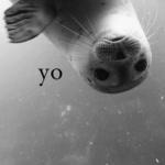 Аватар Морской котик (yo / йоу)
