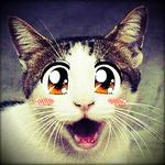 Аватар Кошка с анимешной мордочкой