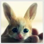 Аватар Кошка или кролик?