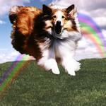 Аватар Собака на фоне радуги бежит по зеленому полю