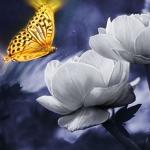 Аватар Бабочка на цветке