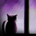 Аватар Кошка смотрит в окно, за которым идет дождь