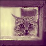 Аватар Кошка смотрит в окно