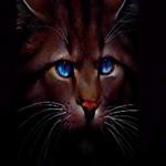 Аватар Коричневый кот с голубыми глазами на черном фоне