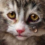 Аватар Плачущий маленький котенок
