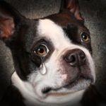 Аватар Плачущий маленький щенок