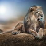Аватар Лев лежит на камне, ву John Wilhelm