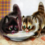Аватар Два котенка пьют молоко и смотрят друг на друга
