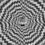 Аватар Серый кот в квадрате