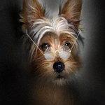 Аватар Мордочка лохматого пса в очках на носу