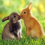 Аватар Целующиеся кролики сидят на зеленой траве