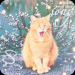 Аватар Рыжий кот на фоне цветущей вербы (Song / песня)