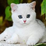 Аватар Белый котенок лежит на заборе, под деревом с зелеными листочками