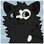 Аватар Черный котенок что-то задумал