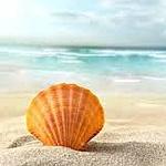 Аватар Ракушка на песчаном берегу моря