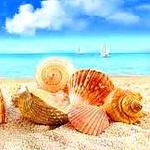 Аватар Ракушки разбросаны на песчаном берегу моря